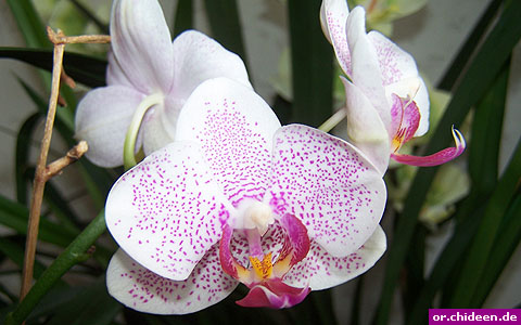 orchid identifying. Black Bedroom Furniture Sets. Home Design Ideas